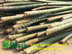 CHINA BAMBOO PHOTOS